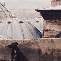 12 kép Isztambul állatairól