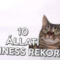 10 Állati Guinness rekord