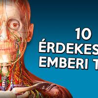 10 érdekesség az emberi testről