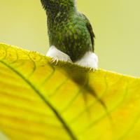 Teendők kolibritámadás esetén