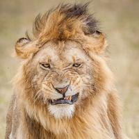 Az oroszlánszelídítés alapjai