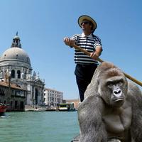 Barátunk a gorilla, avagy a házimunka forradalmasítása