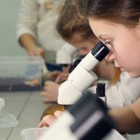 Biosz és kémia: nincs elég óra, nincs elég tanár, nincs elég motiváció