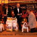 Luton 2010.03.06 Inc. Bulldog Club Championship Show-ja. Az első fejezet