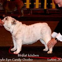 2010.03.06 The Incorporated Bulldog Club Championship Show. Luton. A negyedik rész
