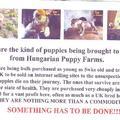 Mrs. Karen Hayward's  letter about the leaflet @ BOY 2012., avagy maximálisan elhatárolódik az Anya Klub.