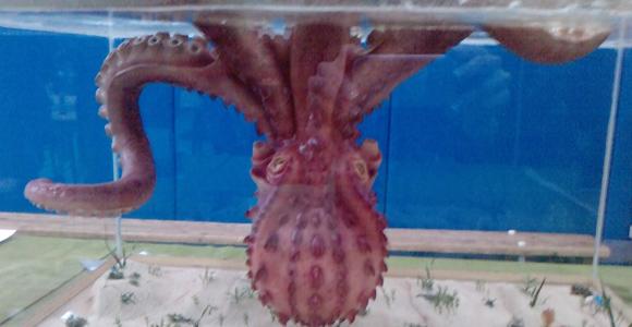 octopuss.jpg
