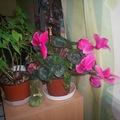 Tavasz+virágok+fényképek