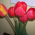 Tavaszi szünet~
