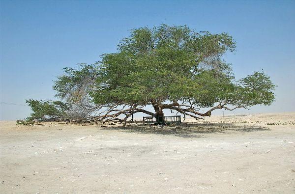 TreeOfLife_k.jpg
