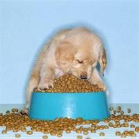 A kutya vacsorája