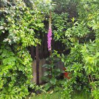 A kert a nagy esők után
