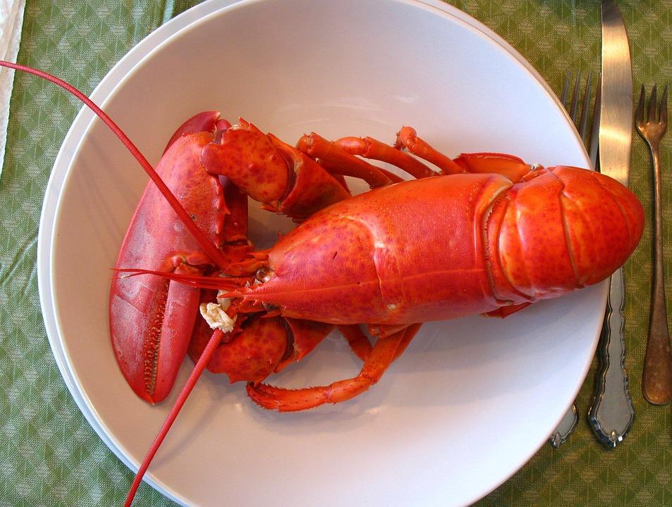 lobster-1089140_960_720.jpg