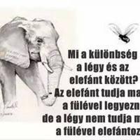 Az elefánt és a légy