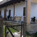 Vanyarcon pörögtünk – Haluskafesztivál 2011