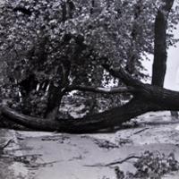 Amikor tornádó pusztított Balatonfüreden