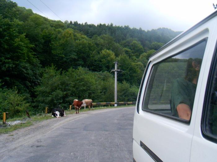 Állatok az úton