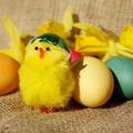 Húsvéti kiscsibék
