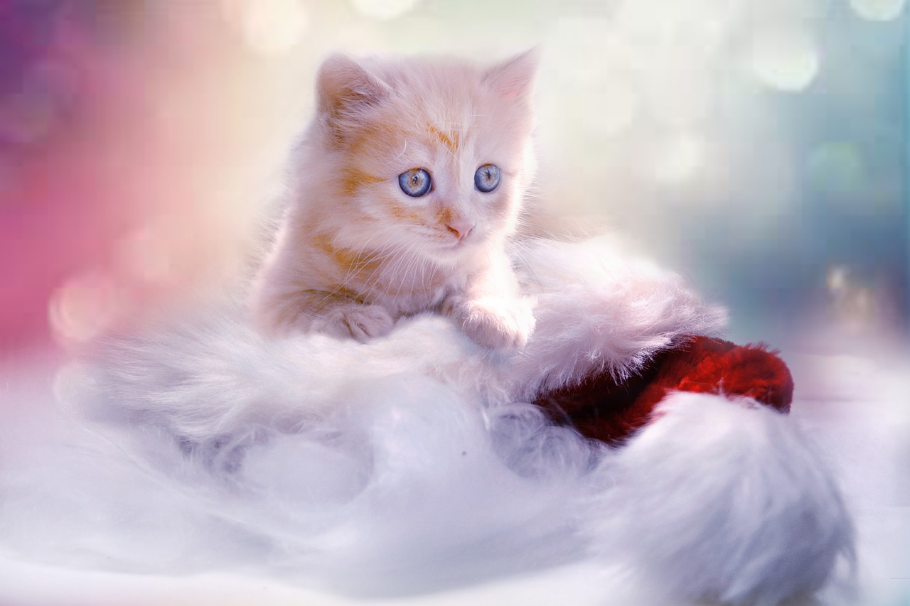 kitten-1856134_1280.jpg