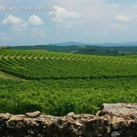 San Gusmé és a körívben futó szőlősorok