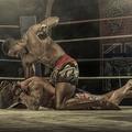 MMA 2013