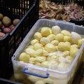 Közösségi krumplihámozás