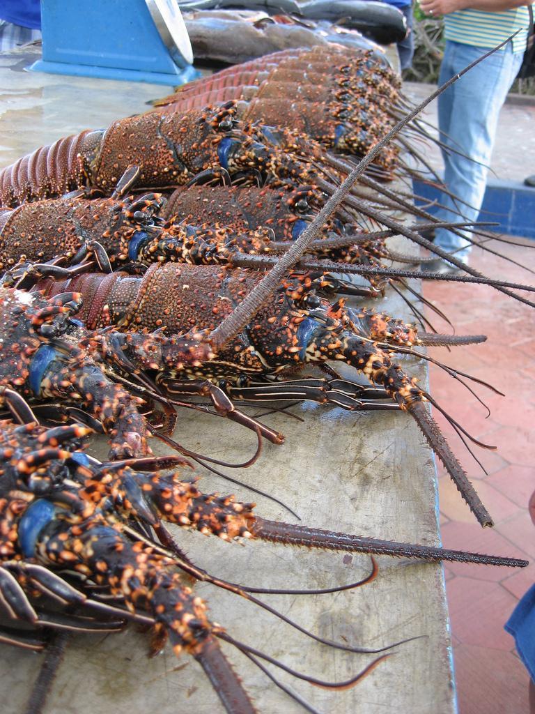 fish-market-puerto-ayora-santa-cruz-island-galapagos-islands-2_5585828_l.jpg