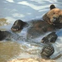 Lássuk a medvét!