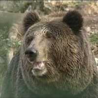 2011: Fogadj örökbe Te is egy medvét!
