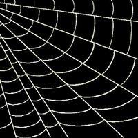 A világháló pókja