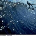 Egy szörfös élete - Surfwise előzetes és képek