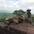 Világörökségek Sri Lankán