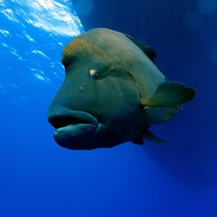 Vörös-tengeri ki kicsoda