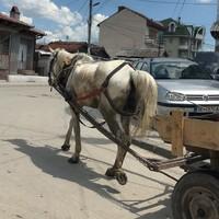 Suto Orizari, a világ roma fővárosa
