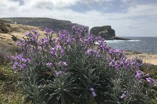 Gozo, az öröm szigete