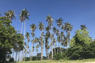 Ultimate Borneó: orángután, dzsungel, tenger