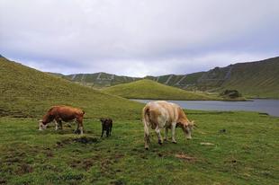 Corvo, a tehenek Azori szigete