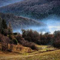 A legszebb erdők Magyarországon/Beautiful forests in Hungary