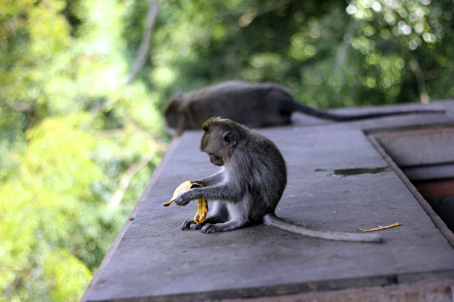 ubud-monkey-forest-indonesia-15-by-kris-wigley.jpg