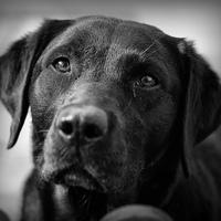 A világ legmenőbb kutyája - legalábbis mostanában