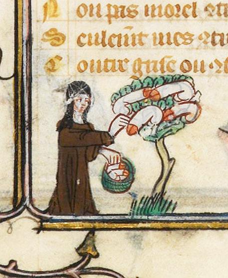phallus-tree_roman-de-la-rose_c1325-1353.jpg