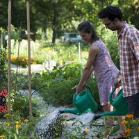 Budapest üde színfoltjai a közösségi kertek