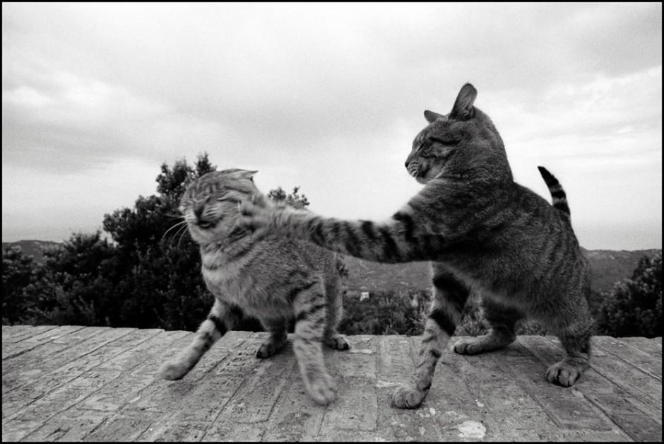 Cat-Fight-940x628.jpg