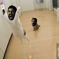 Leonidas macskák