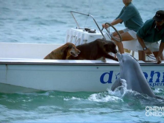 minden a látó delfinekről