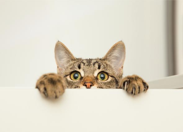 macska.jpg
