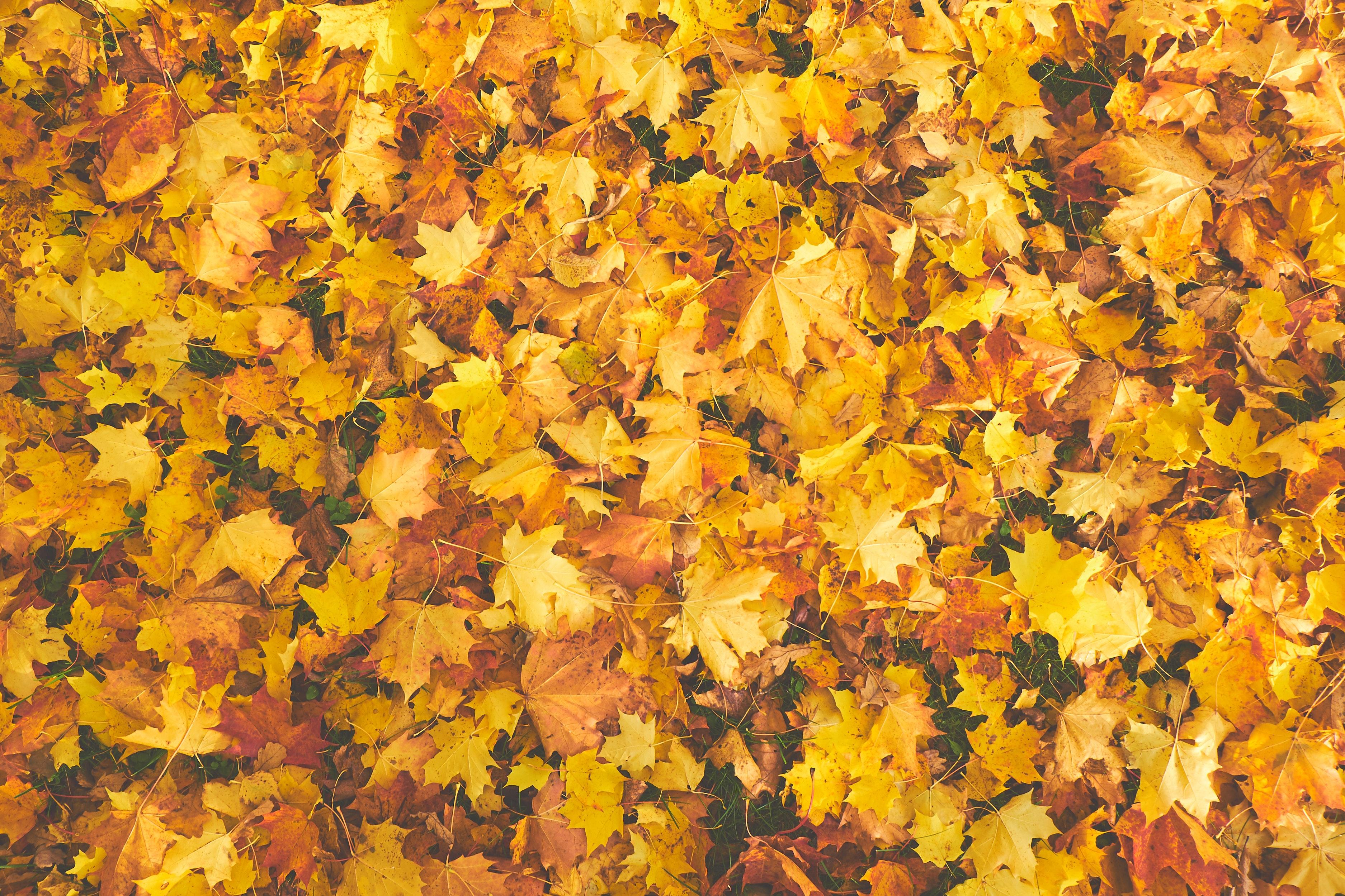 autumn-autumn-colours-bright-756903.jpg