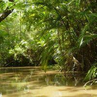 Tudod e az esőerdőkről?...