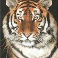 Tudod e a tigrisekről...