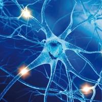 Forradalom az idegtudományban